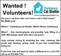 cat shelter ad