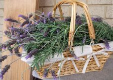 fresh_lavender_in_basket_photo_Amandaism_Art