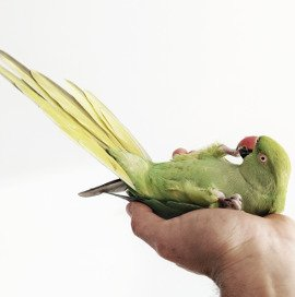 The Pet Expert: Why Birds Make Great Pets