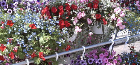 flowers-hanging-baskets468